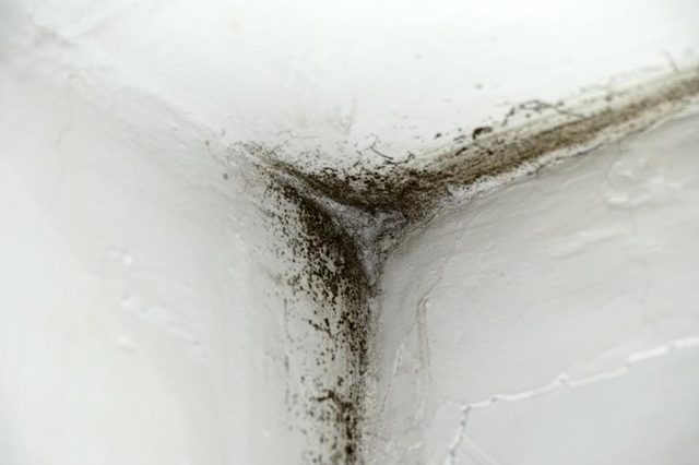 How To Recognize The Warning Signs Of Toxic Mold 4